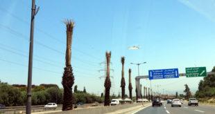 palmiers morts sur l'axe Zeralda-Dar El Beida